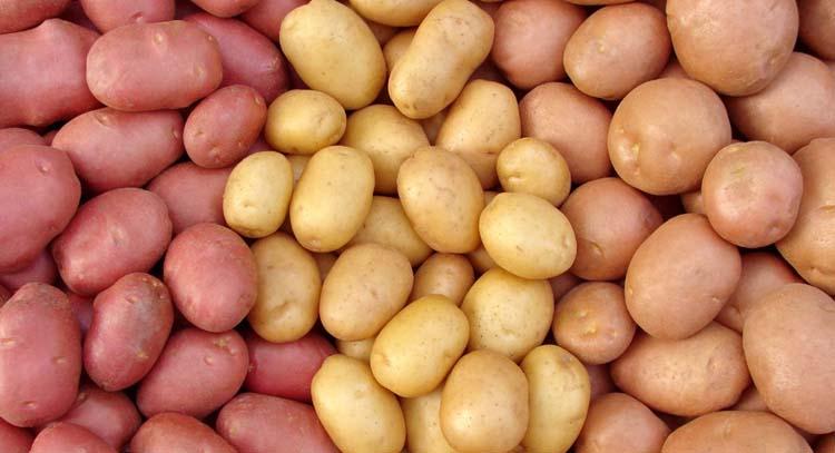 Желтый сорт картофеля для диабетика